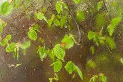 落叶被困住对从雨下落得到湿的窗口 与春天新的叶子的舒适窗口 免版税库存照片