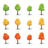 落叶集结构树 免版税库存照片