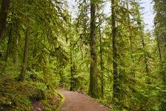 落后与生苔树干在原始林雨林里在Vancou 库存图片
