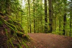 落后与生苔树干在原始林雨林里在Vancou 免版税库存照片