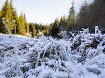 落后与冻草通过秋天森林 图库摄影