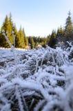 落后与冻草通过秋天森林 免版税库存照片