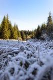 落后与冻草通过秋天森林 库存照片