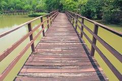 落后为了走能学会自然在热带森林里 免版税库存照片