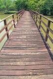 落后为了走能学会自然在热带森林里 免版税图库摄影
