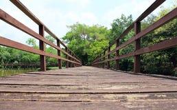落后为了走能学会自然在热带森林里 库存照片