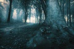落后入一个有雾的蠕动的森林万圣夜森林 图库摄影