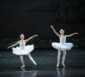 落后天鹅芭蕾天鹅湖 库存图片
