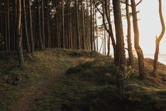 落后路在森林里离日落的海不远在夏天 拉脱维亚 图库摄影