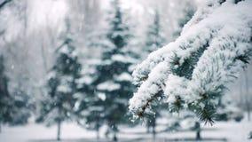 落在冷杉木分支的雪 股票视频