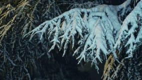 落在晚上02 1的雪 影视素材