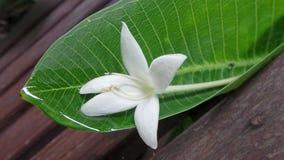 落在木庭院长凳的湿绿色叶子的白花在雨以后 免版税库存图片