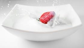 落在牛奶的草莓与飞溅 红色白色 免版税库存图片