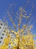 落在秋天的叶子 免版税库存图片