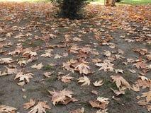 落在秋天,干燥树叶子离开,坐银行,公园场面的图片在秋天的, 库存图片