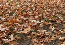 落在秋天,干燥树叶子离开,坐银行,公园场面的图片在秋天的, 库存照片