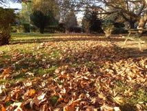 落在秋天,干燥树叶子离开,坐银行,公园场面的图片在秋天的, 免版税图库摄影