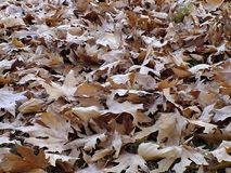 落在秋天,干燥树叶子离开,坐银行,公园场面的图片在秋天的, 免版税库存图片