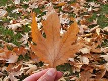 落在秋天,干燥树叶子离开,坐银行,公园场面的图片在秋天的, 图库摄影