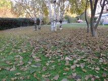 落在秋天,干燥树叶子离开,坐银行,公园场面的图片在秋天的, 免版税库存照片