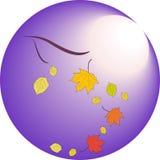 落在秋天离开在月光背景  库存图片