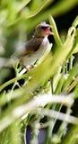 落在花的小鸡 免版税图库摄影