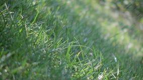 落在草的雨 股票视频