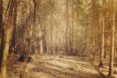 落在道路的光束在秋天森林里 免版税库存图片