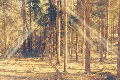 落在道路的光束在秋天森林里 免版税图库摄影