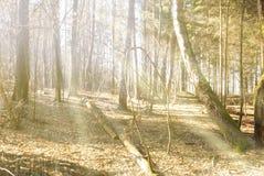 落在道路的光束在秋天森林里 免版税库存照片