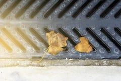 落在金属流失的布朗叶子 免版税库存照片