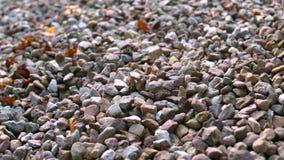 落在更多小卵石上的小卵石 股票视频