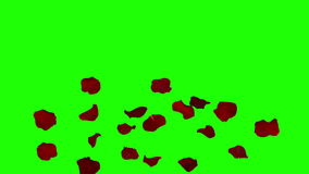 落在绿色屏幕上的玫瑰花瓣 影视素材