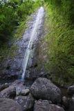 落夏威夷海岛manoa奥阿胡岛池 免版税图库摄影