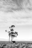 落寞南部非洲的干旱台地高原 免版税库存照片