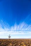 落寞南部非洲的干旱台地高原 库存图片