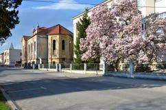 落寞犹太犹太教堂在阳光下在春天 从街道的后面看法 免版税图库摄影