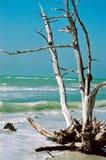 落寞的海滩 免版税库存照片