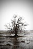 落寞结构树 图库摄影