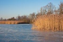 落寞荷兰语安排滑冰的沼泽地 库存照片