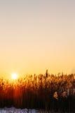 落日在冬天期间在湖用茅草盖 图库摄影