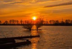落日点燃的树 库存照片