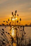 落日照亮的起毛机 库存照片