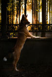 落日的光芒 库存照片