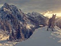 落日阐明的壮观的冬天山风景 免版税库存图片
