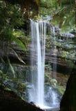 落森林雨罗素瀑布 免版税图库摄影