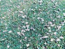 落的叶子在庭院里 免版税库存照片