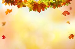 落的叶子自然本底 库存图片