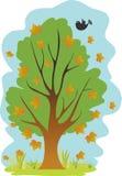 落的叶子结构树 库存图片