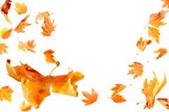 落的叶子 免版税库存照片